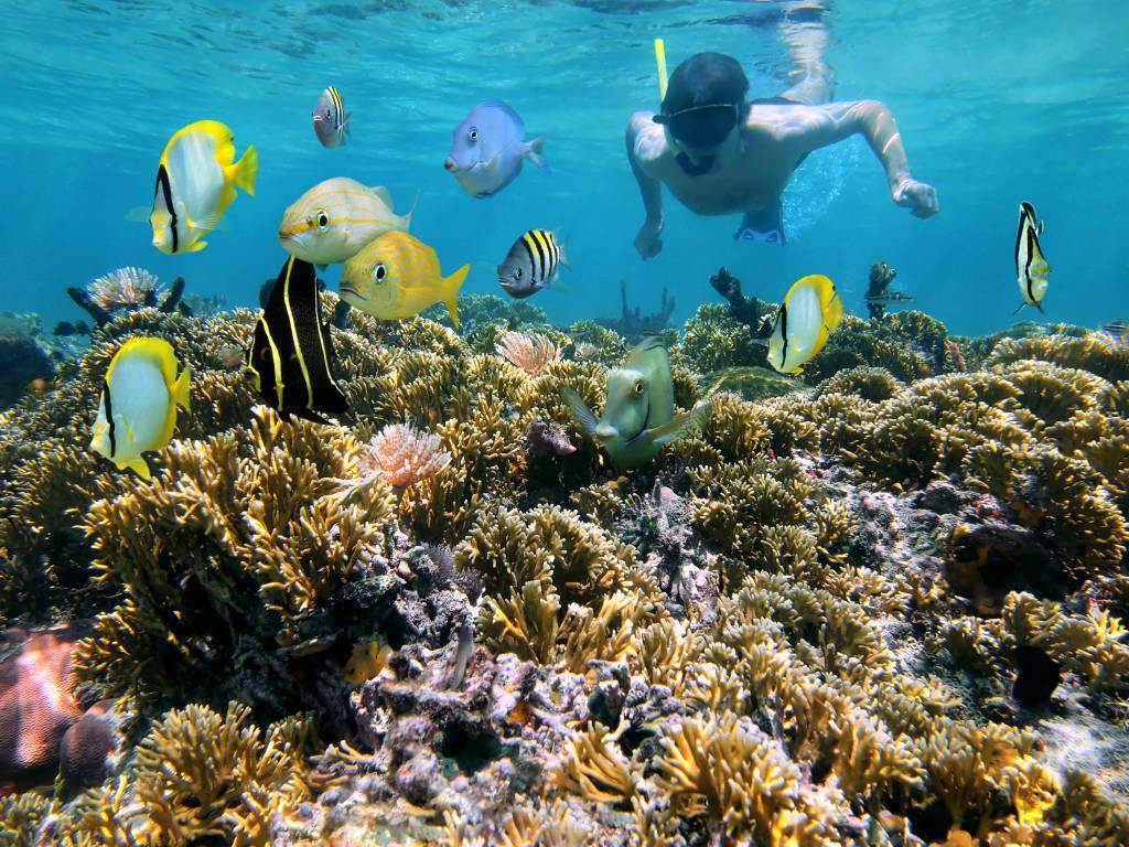 plongee guadeloupe - Activités en Basse Terre